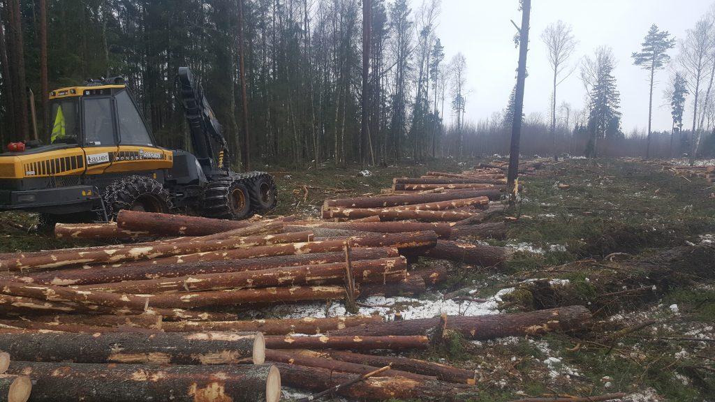metsamajandus